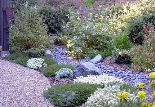 What is xeriscaping xeriscaping is a low maintenance form for Low maintenance drought tolerant plants