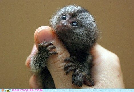 cute animals - Squee Spree: Thumbs Up!