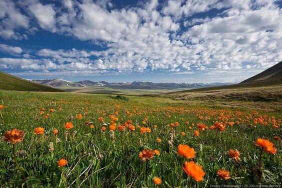 Primavera Montanhas Altai