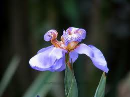 azul flores - Pesquisa Google