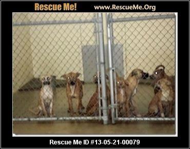 — Boxertown — Georgia Boxer Rescue — ADOPTIONS —RescueMe.Org