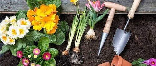 c85d2357b41e175b80a3409e5ab97230 - What Do You Need To Start A Gardening Business