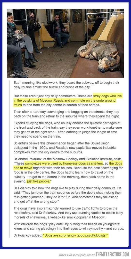 They have or are trying to kill all these dogs: