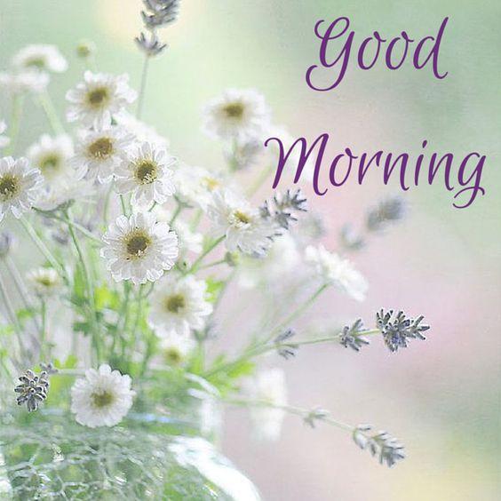"Good morning! click to see a beautiful selection of ""good morning"" pics!"