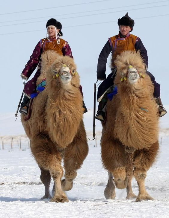 Camels riders in the Gobi desert, Mongolia
