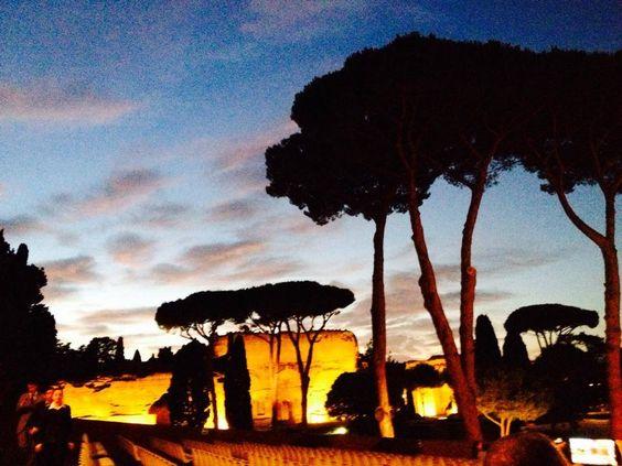 ROMAN PINE TREES at Dusk
