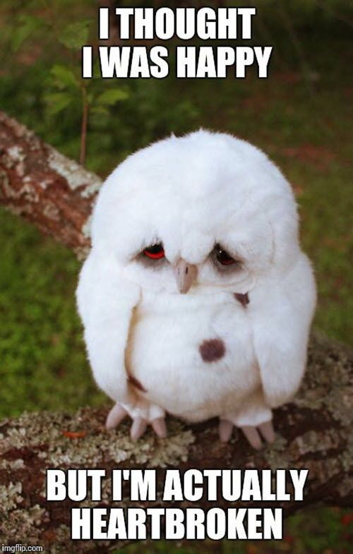 20 Heartbroken Memes That Will Cheer You Up Sayingimages Com Funny Owls Cute Animals Cute Baby Animals
