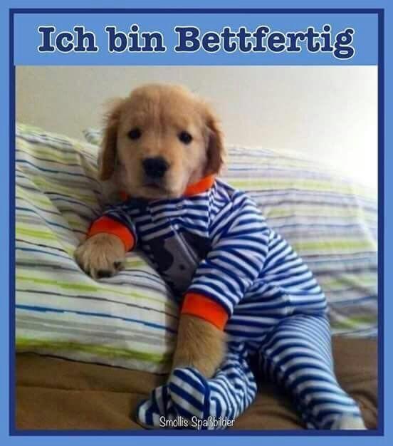 Pin Von P Hoellerich Auf Gute Nacht Golden Retriever Niedliche Hunde Lustige Hund Bilder