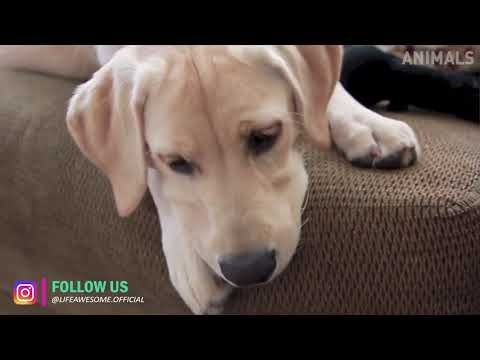 Download Social Video Instantly Funny Animal Videos Cute Cats