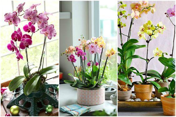 Картинки по запросу Орхидные