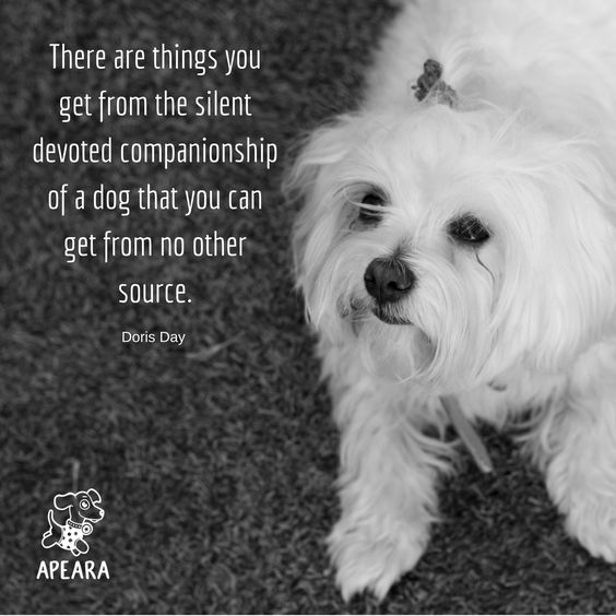 Image By Apeara Ltd On Favorites Dog Quotes Dog Life Dog Mom