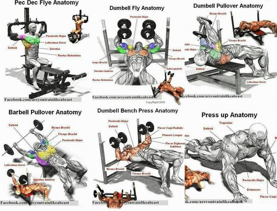 Chest workout techniques   Body   Pinterest   Chest workouts and