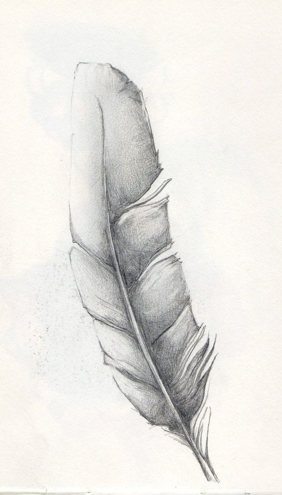 http://th05.deviantart.net/fs70/PRE/i/2010/236/5/f/Feather_Sketch_by_SparkyToraInk.jpg