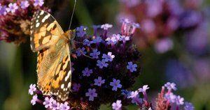 Veille réglementaire: loi sur la biodiversité
