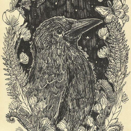 Crow by Anja Mulder