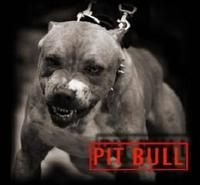 SOCIAL CONSTRUCTION OF THE PIT BULL