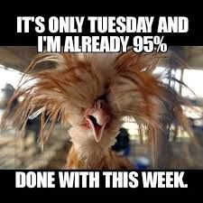 Image Result For It S Only Tuesday And I M Already 95 Done With This Week Morning Quotes Funny Tuesday Quotes Funny Tuesday Humor