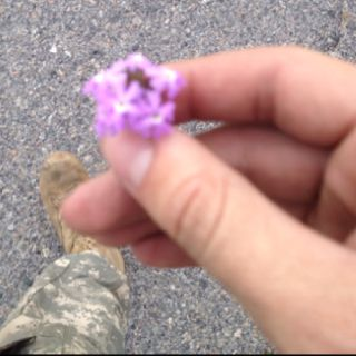 a soldier that came into my work sent me this! so cute