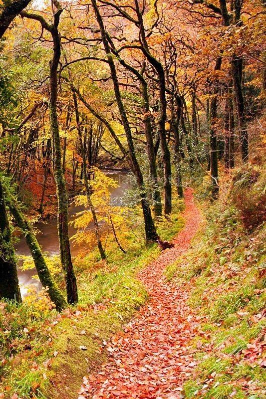 Riverside - Shades of Autumn