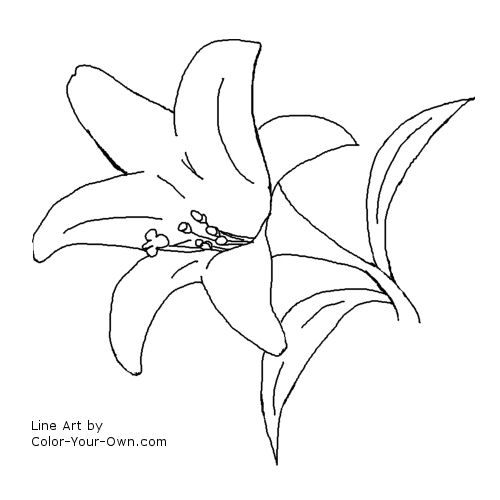 Easter Lilies Coloring Page Flower Coloring Pages Easter Lily Lilies Drawing