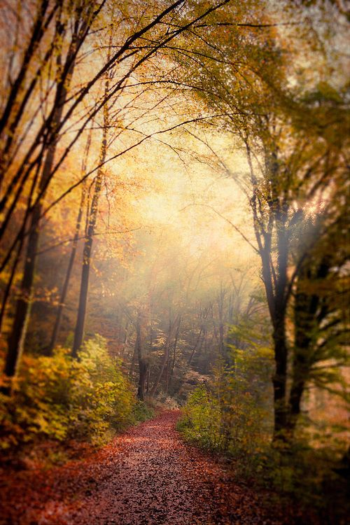 German forest in autumn colours -->wherever in Germany it is, I want to go there. :)