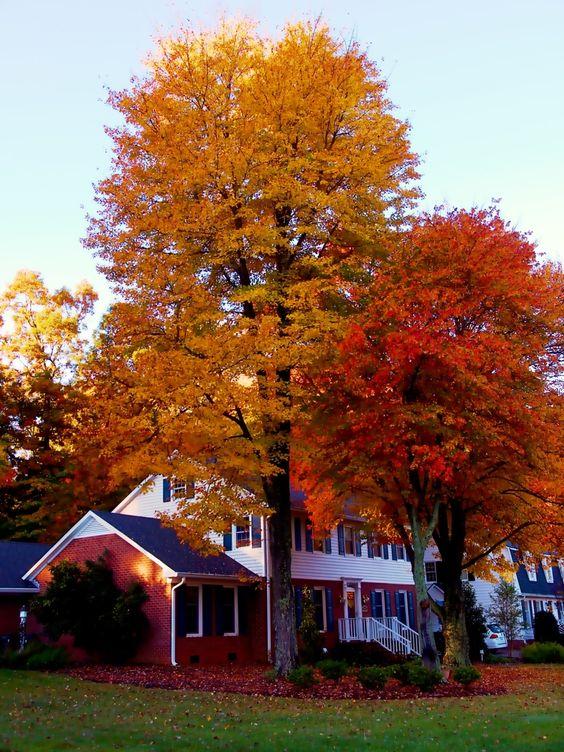 North Carolina autumn... priceless!