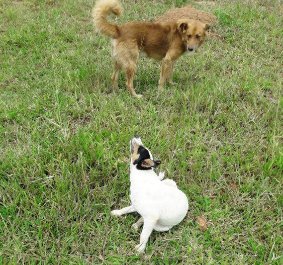 Evite alimentar cães nas frentes de serviço, com sobras de comida