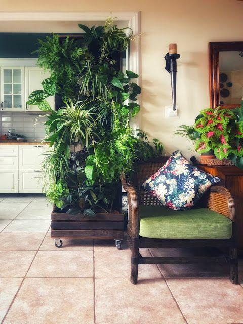 Pin On Plants Flowers At Home Kwiaty Rosliny W Domu
