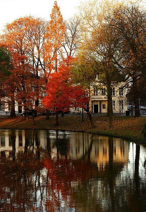 beautiful home. beautiful trees in fall. pond.