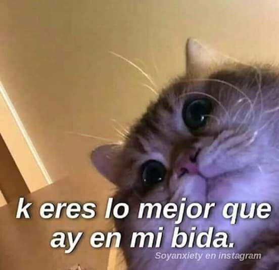 Chats Kookv Cute Memes Cute Love Memes Funny Spanish Memes