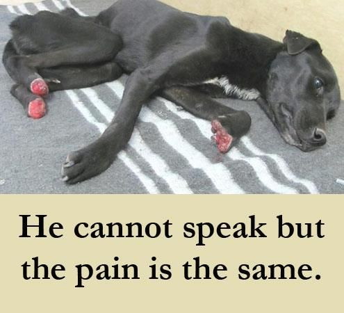 poor dog. He cannot speak but the pain is the same