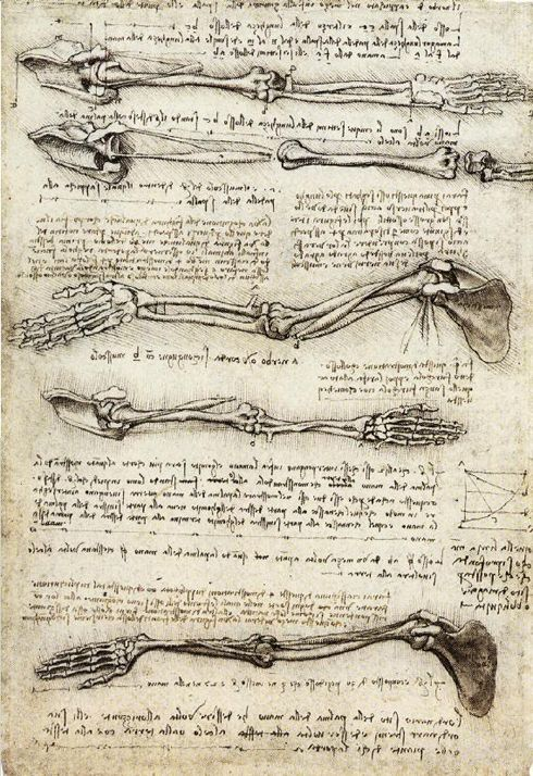 Leonardo da Vinci, Studies of the Arm showing the Movements made by Biceps (ca. 1510).