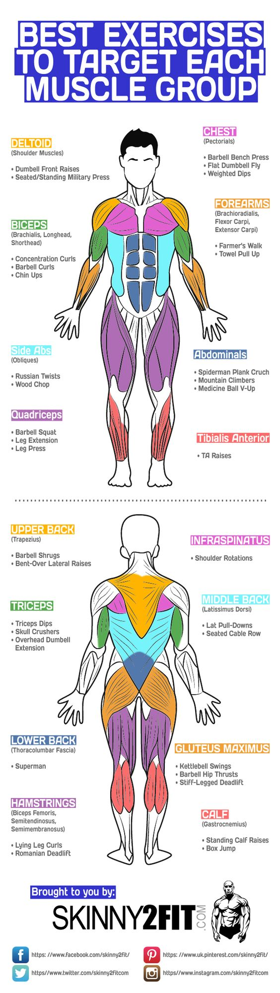Of course compound exercises like the bench press, squat and deadlift are good…