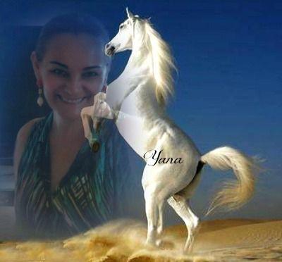 cavalos ! minha paixão