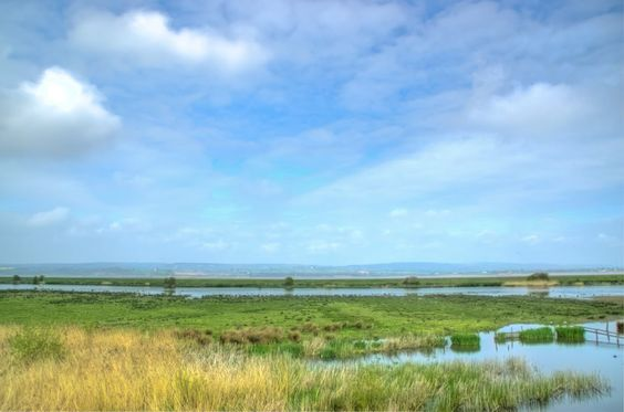 Slimbridge Photo:  This Photo was uploaded by arollett. Find other Slimbridge pictures and photos or upload your own with Photobucket free image and vide...