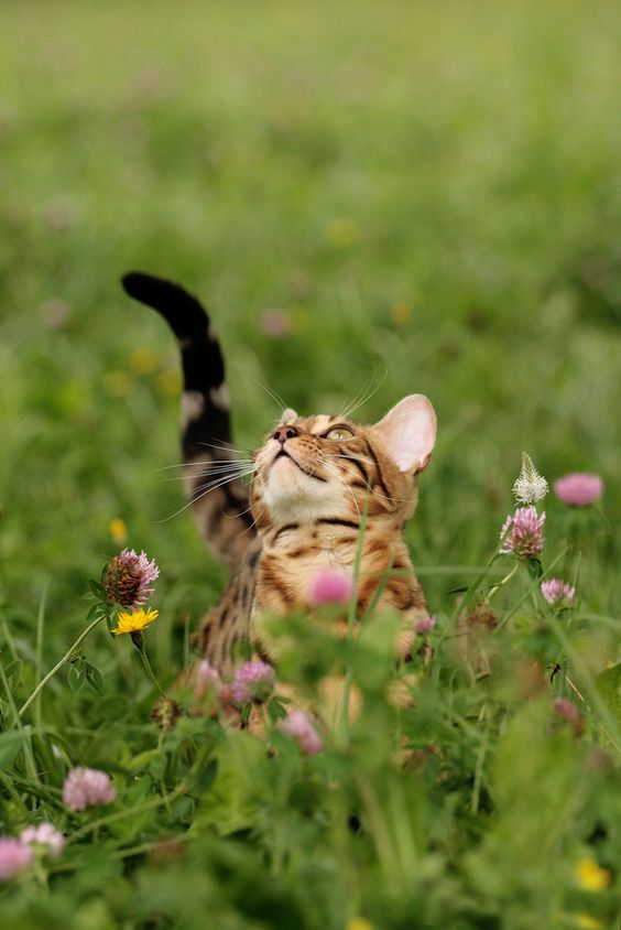 Cats know which herbs and plants are beneficial to healing. Often they will lay on, rub on or eat depending on the need.