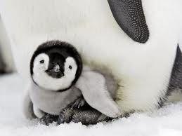 .: Animals Julia, Adorable Animals, Favorite Animal, Baby Animals, Baby Penguins, Animals 3, Animal Babies, Animals Showing