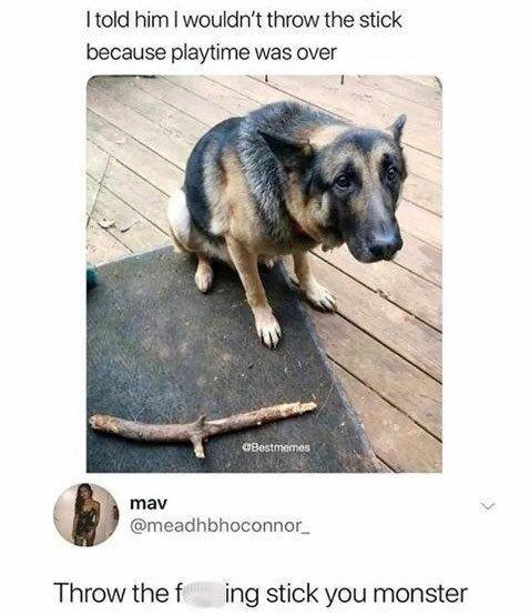 32 Lustige Meme Von Unterschiedlicher Sinnlosigkeit Lustig Memes Punktlosigkeit Varying K In 2020 Lustige Tiermemes Lustige Bilder Von Tieren Lustige Hund Meme