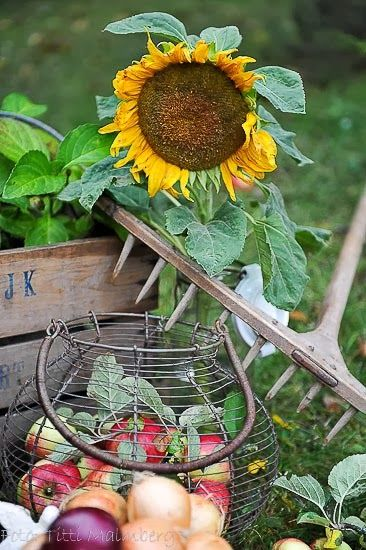 Country Charm - Sunflowers