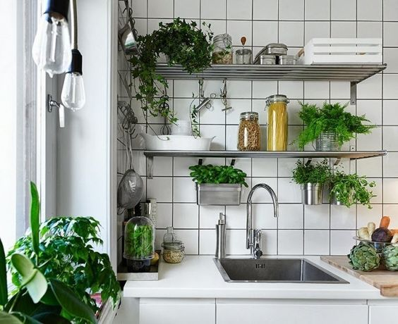 Küchenkräuter in Metall Behältern und Konservendosen