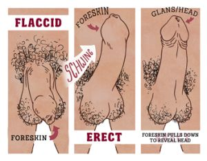 guide users manual uncircumcised
