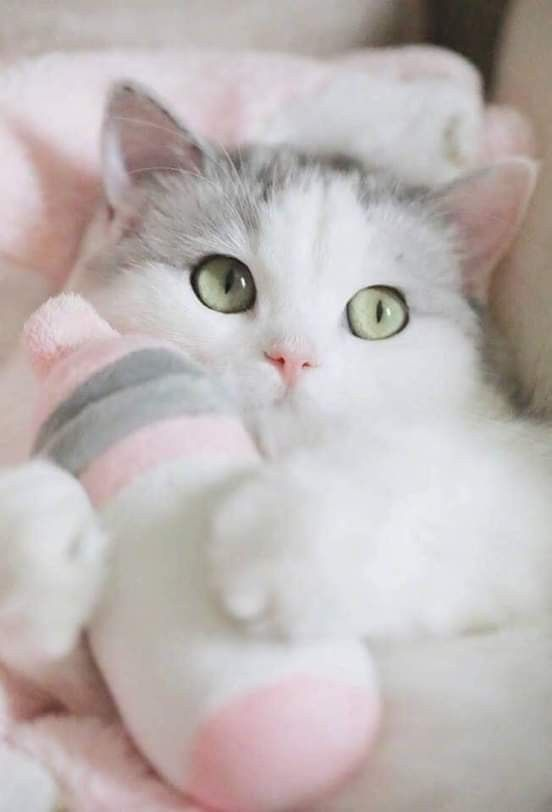 Pin By Zlatka Moljk On Pink Cute Cat Gif Cute Cats And Kittens