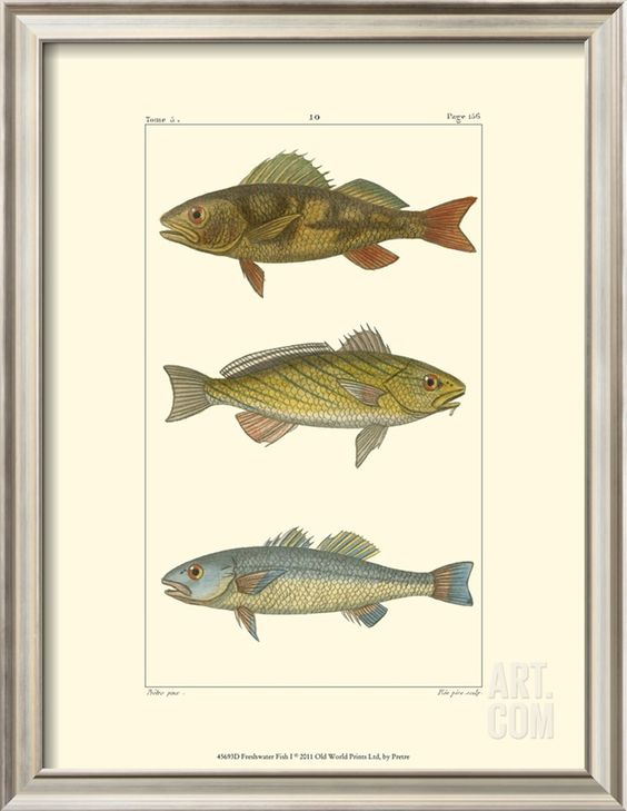 Freshwater Fish I Art Print at Art.com