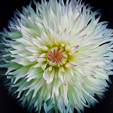 Dahlia By Dennis Wotkiewicz Dahlia Wonderful Flowers Flower Painting