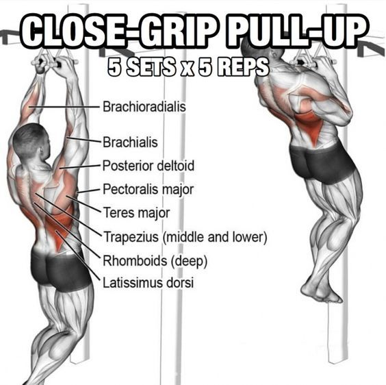 Related Posts Core Forge Abshanging Leg And Hip Raise Exercisemovement Poster Sumo Deadlift High Pullrea Bodyweight Workout Back Workout Calisthenics Workout