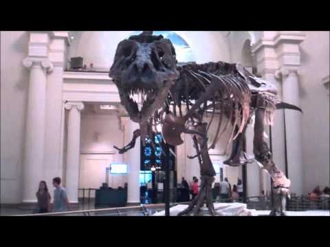 "Dinosaur fossil ""Sue"" at Chicago's Field Museum - YouTube"