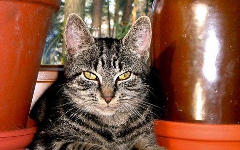 Greenpäck Katze | Katzenkräuter | Nach Verwendung | Rühlemann's Kräuter und Duftpflanzen
