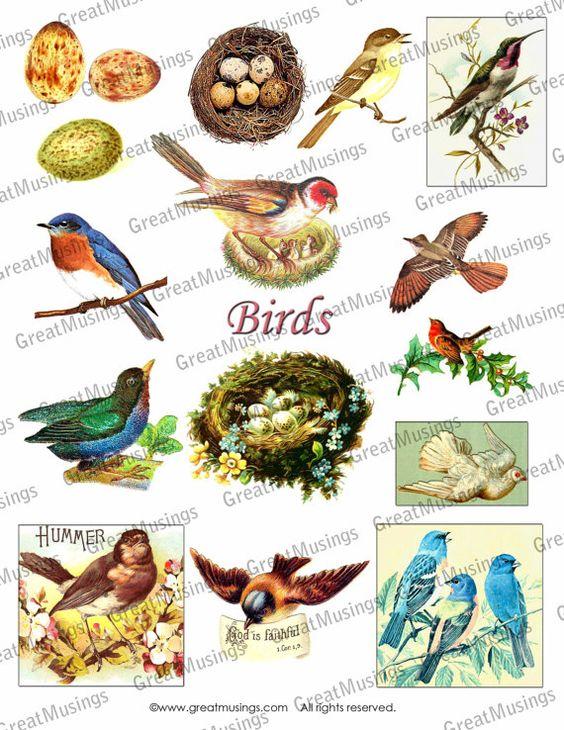 Birds Eggs Nest Vintage Images Download Digital by GreatMusings