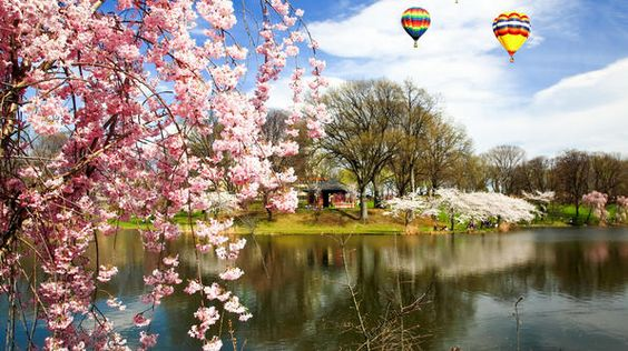 """The Essex County Cherry Blossom Festival in New Jersey boasts over 4,000 cherry trees in the state's """"pinkest park."""""""