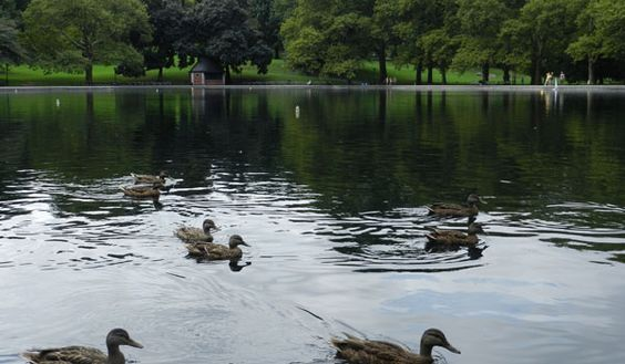 patos-de-central-park